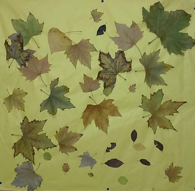 mural_hojas_otoño